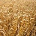 Reform előtt a közös agrárpolitika