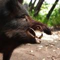 A vadon élő állatok által okozott károkért való felelősség szabályai a bírósági gyakorlat tükrében – Egy bírósági jogalkalmazó tollából